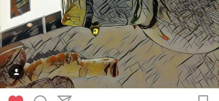 Guanyador del Concurs d'Instagram de la Fira de l'Oli